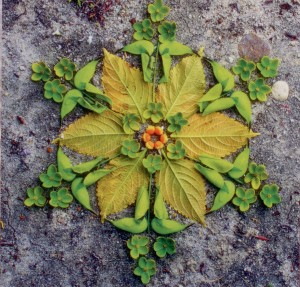 Evenwicht en symmetrie in de natuur en uw leven